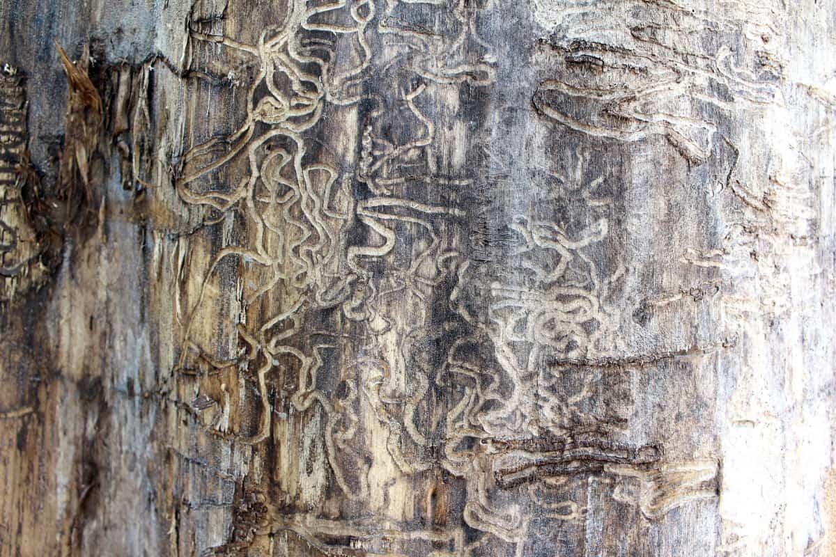 Termite damage repair Sydney